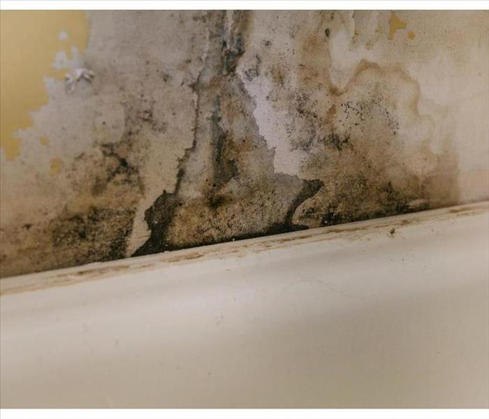 Mold growth on a wall in Murfreesboro, TN due to humidity